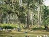 The Seminoles advance-few soldiers left alive