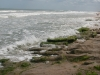 At the park, the Atlantic Ocean exposes layers of coquina
