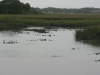 Oyster-beds-galore