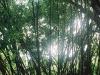 Water Street neighborhood - a bamboo forest